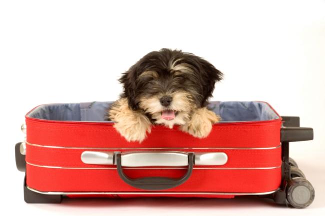 5 consejos para viajar con perro