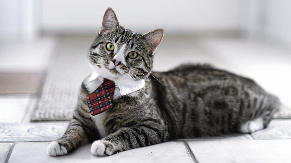 5 startups para amantes de los gatos