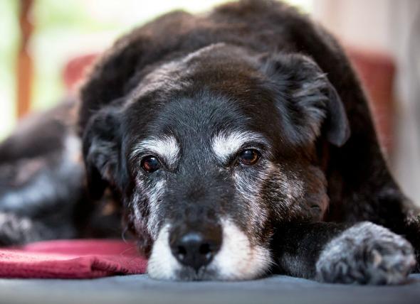 Aliviar la ansiedad por separación en perros