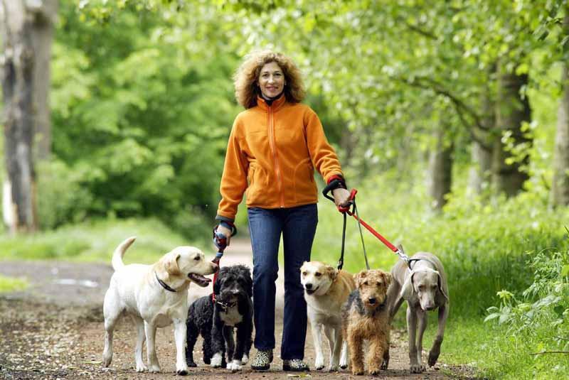Caminando con la manada: 6 consejos para pasear a dos o más perros