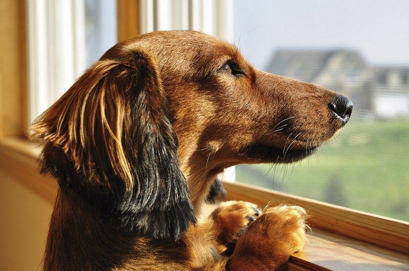 Cómo ayudar a tu perro con la ansiedad por separación
