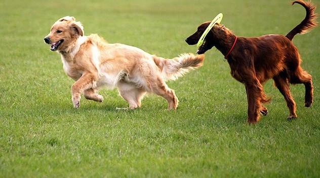 Cómo socializar a tu nuevo perro