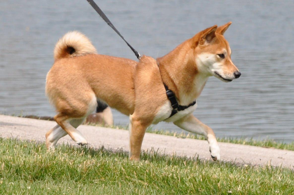 Conozca a otros perros: cómo evitar problemas en el sendero para caminar