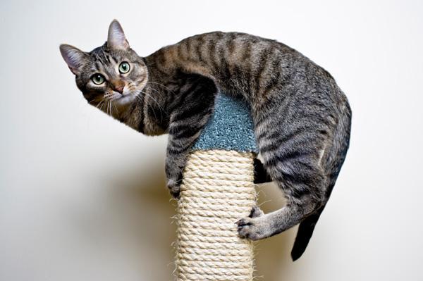 Enseñar a un gato al aire libre a vivir en interiores