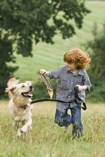 Enseñe a los niños los conceptos básicos del buen manejo del perro.
