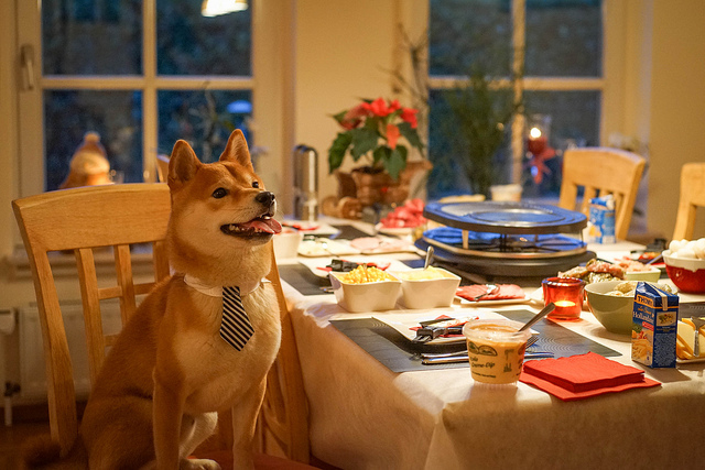 Enséñele a su perro buenos modales en la mesa