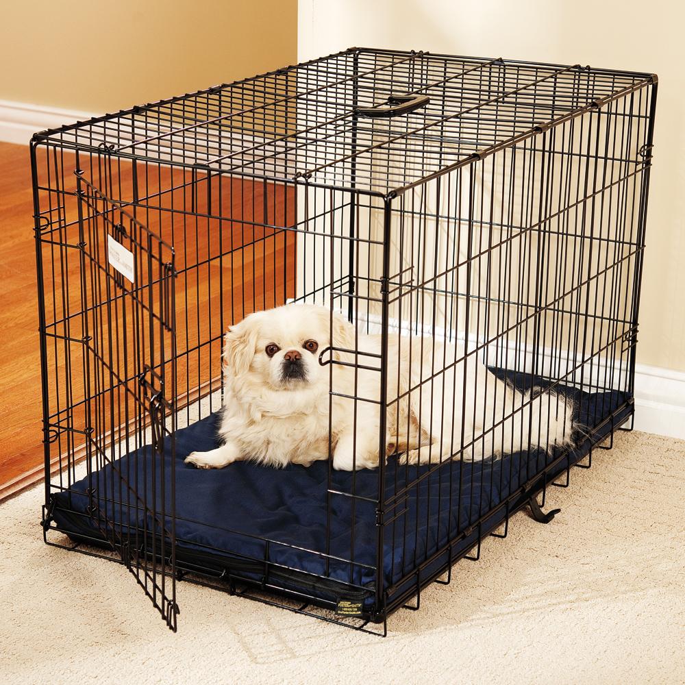 Entrenar a tu perro con una jaula