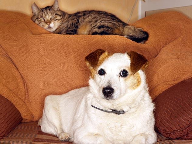 Instrucciones de seguridad para mascotas