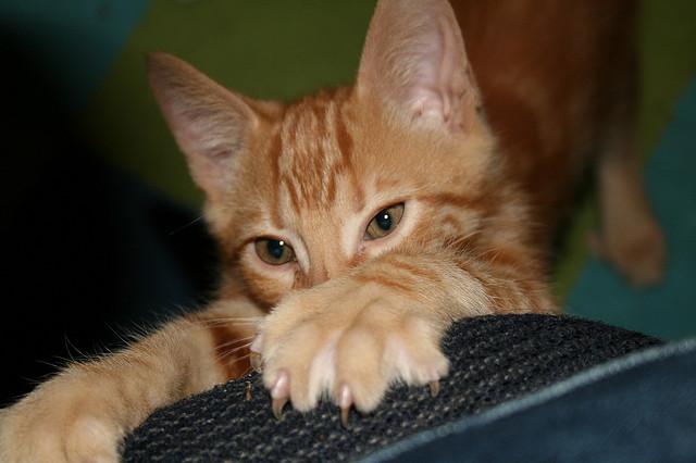 Qué hacer con un gabinete rascador para gatos