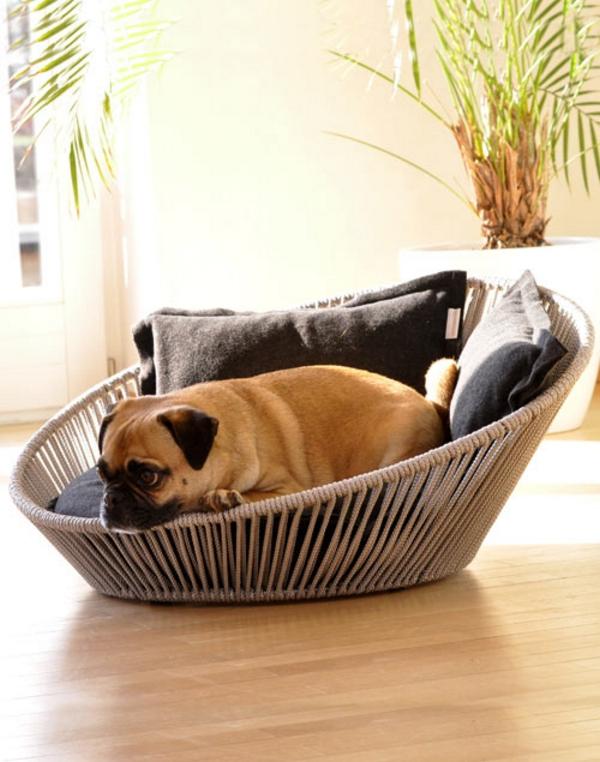 Seguridad animal: cómo proteger su hogar y jardín de los perros