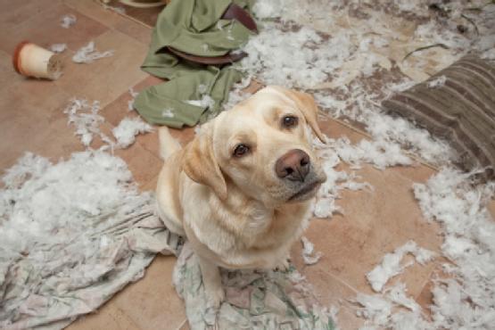 Un perro aburrido es un perro malo, es hora de ser un mejor dueño de mascota