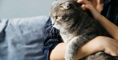 Acariciar un gato estresado aumenta su estres
