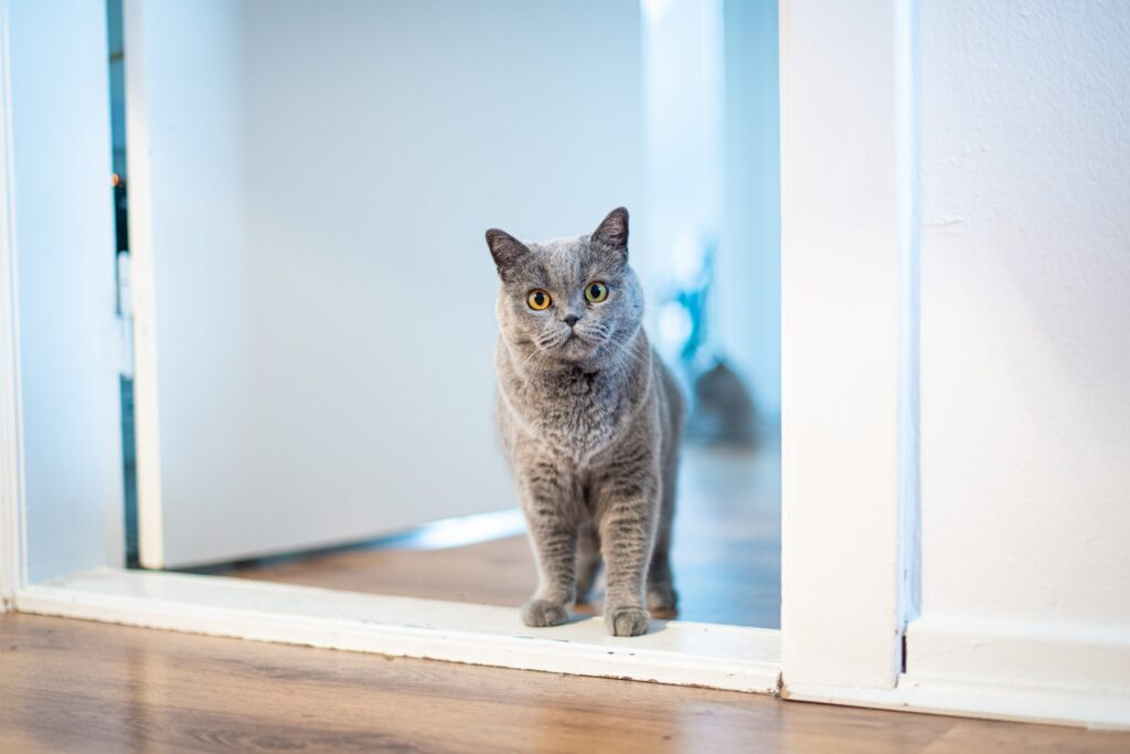 Consejos para el nuevo hogar de su gato
