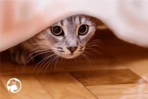 ¿Por qué lo gatos roban cosas?