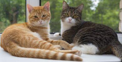 Convertir tu gato de exterior en casero