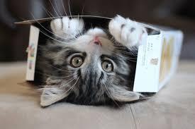 A los gatos les gustan las cajas pequeñas