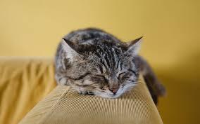 Paz y espacio contra el estrés de los gatos