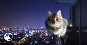 porque los gatos tienen un equilibrio tan bueno