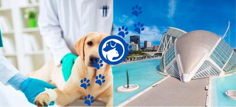 Urgencias veterinarias valencia, teléfonos