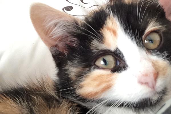 la nariz de gato cambia de color