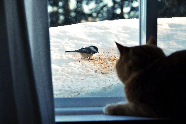 Gato mirando por una ventana a los pájaros y alpiste.