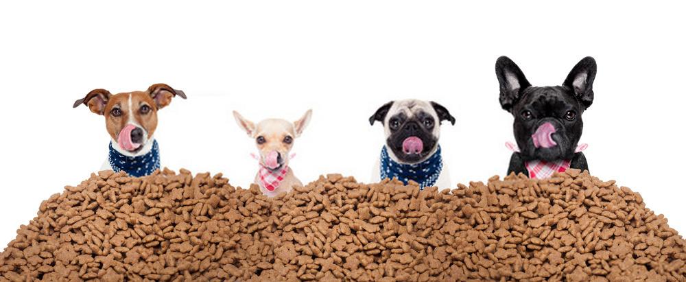 Los perros comen Cheez