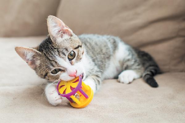 Gatito jugando y mordiendo un juguete.