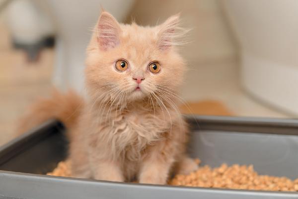 Un gatito que parece sorprendido o confundido en la caja de arena.