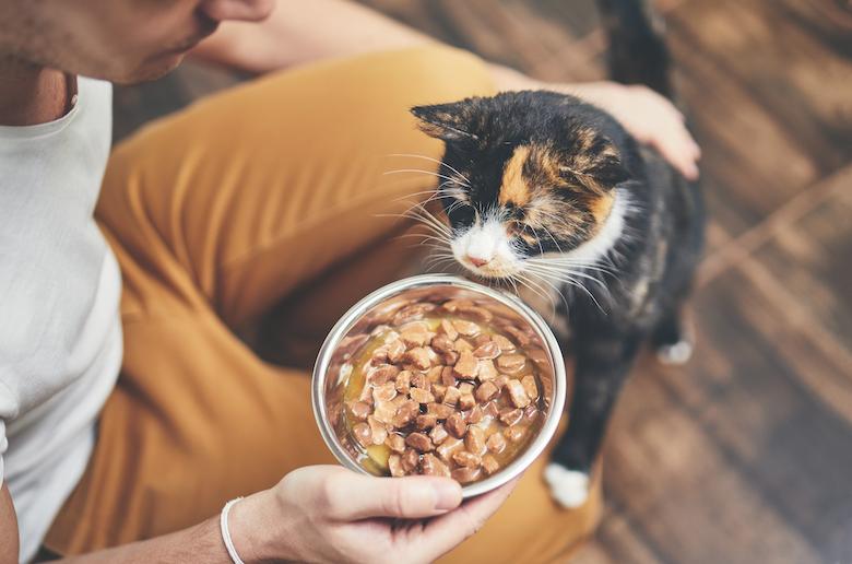 gato temeroso de gente nueva