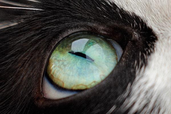 Primer plano de un ojo de gato.