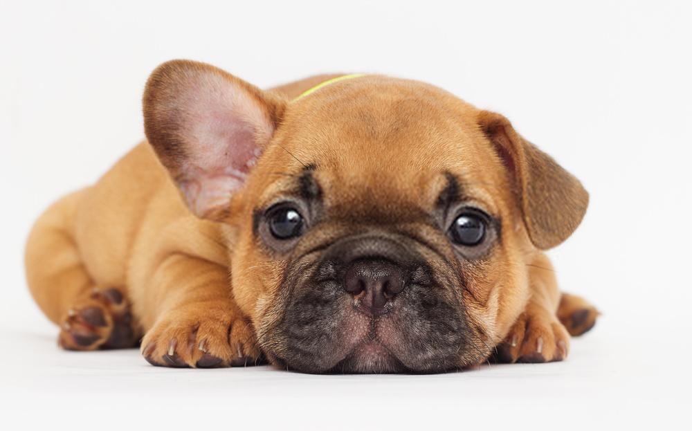¿Cuándo puede un cachorro dejar a su madre?