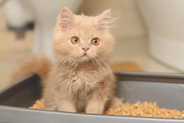 ¿Por qué los gatos entierran sus desechos?