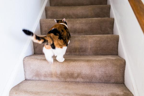 ¿Por qué te siguen los gatos?
