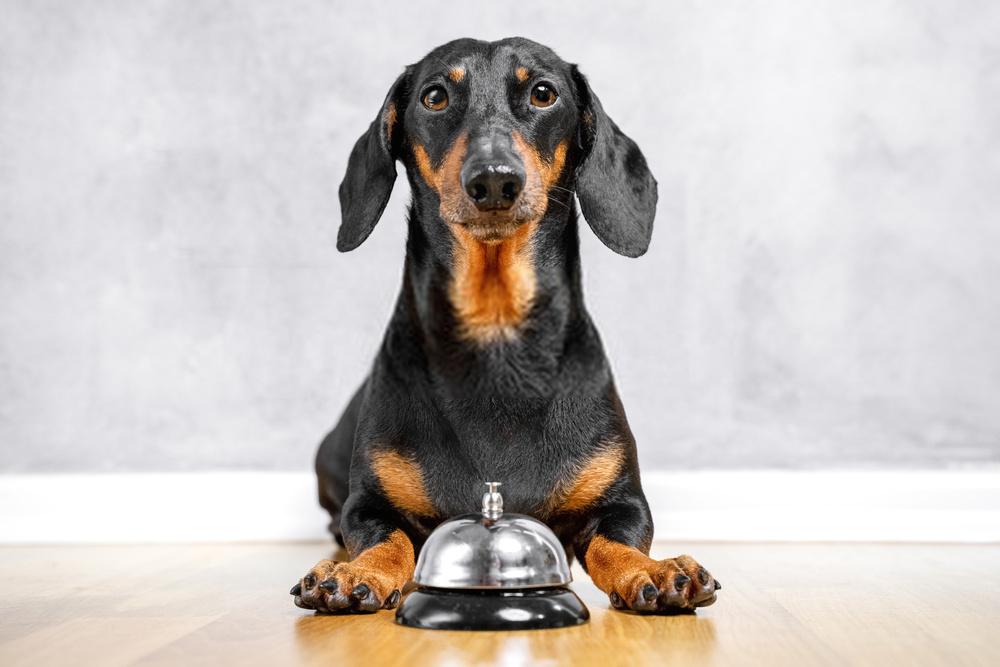 5 razones por las que debes dejar de preocuparte por si los perros pueden comer pimientos morrones