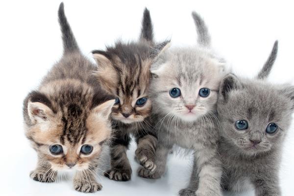 Un grupo de gatitos.