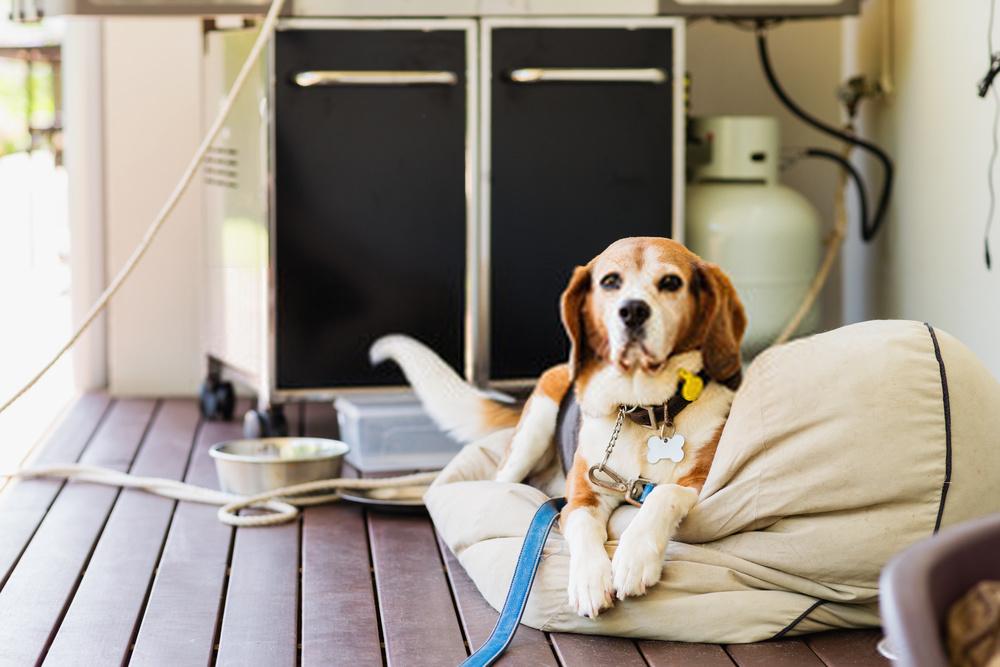 Entrene a su perro para que se siente, se quede y se acueste