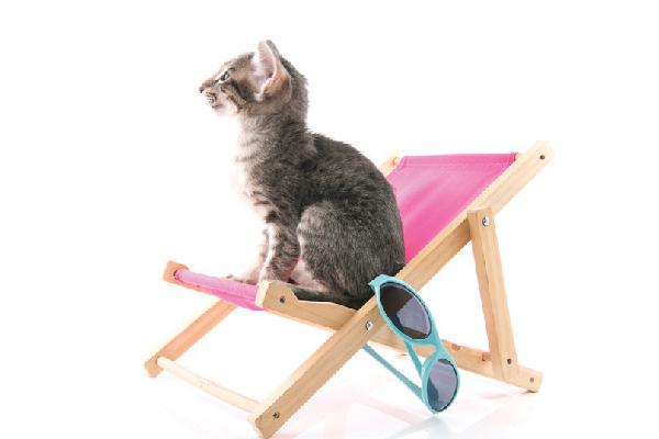 peligros de los gatos de verano