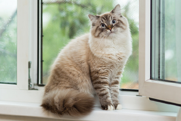 Un gato mirando sorprendido o confundido por una ventana.