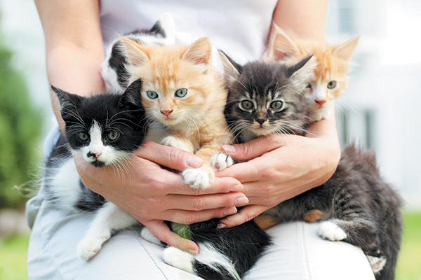 Cinco gatitos en brazos de una persona.