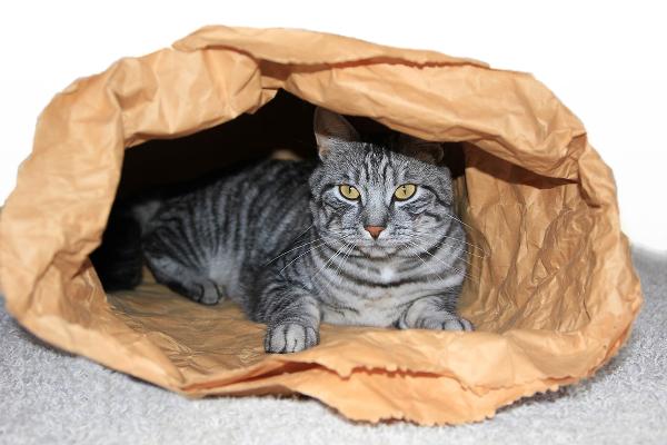 cat-summer-cool-paper-bolsa-135316091