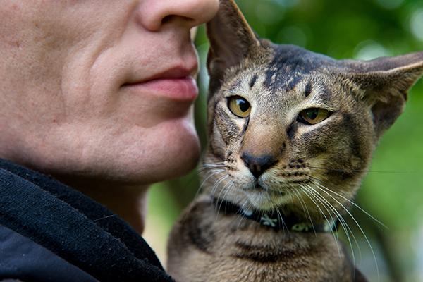 Un hombre que sostiene un gato cerca de su cara.