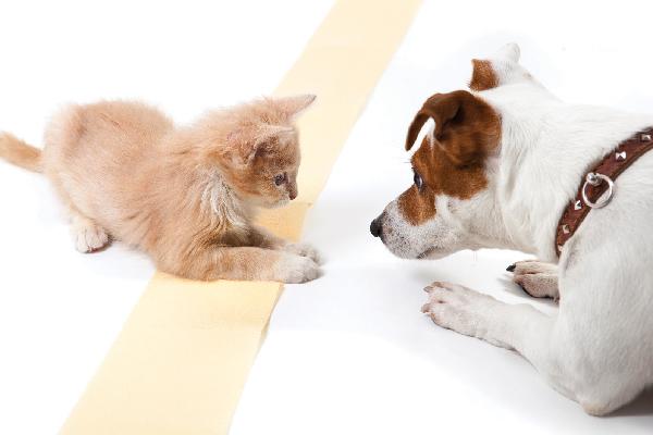 Un gato joven o un gatito jugando con un perro.