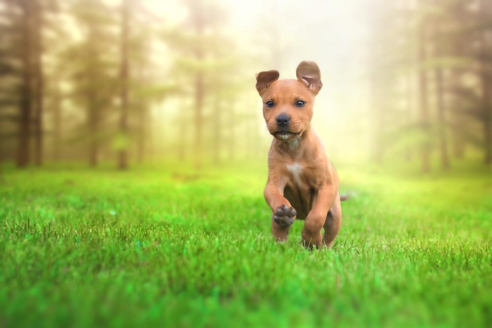 Ejercicio que necesita un cachorro todos los días