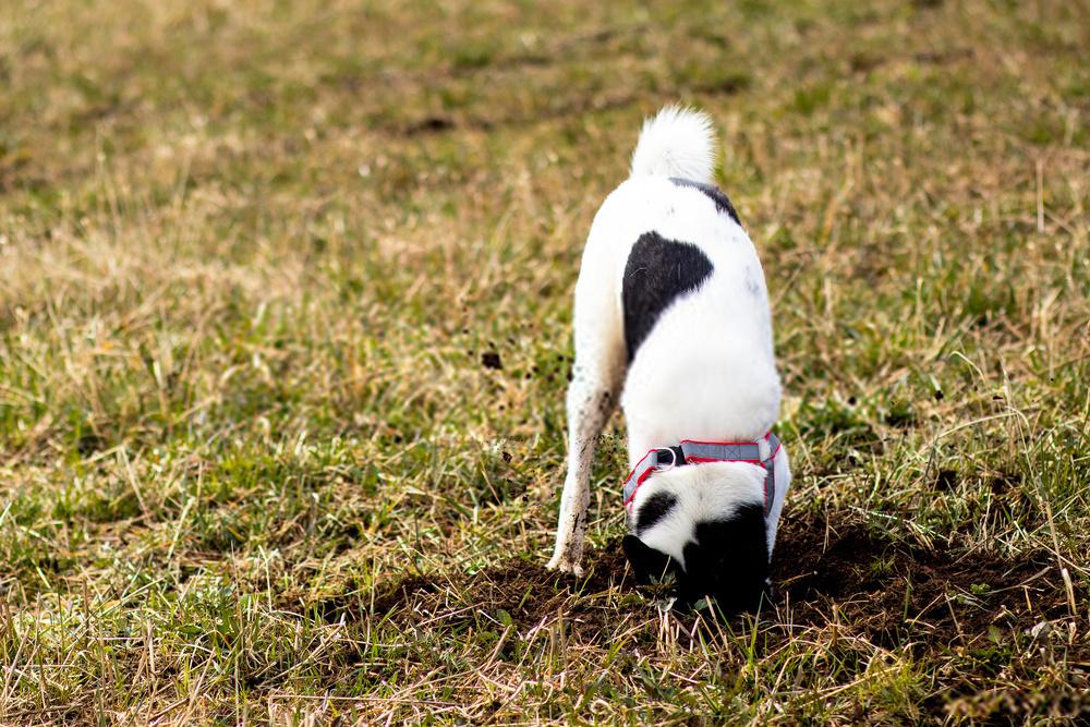 20 consejos para evitar que su perro excave debajo de la cerca