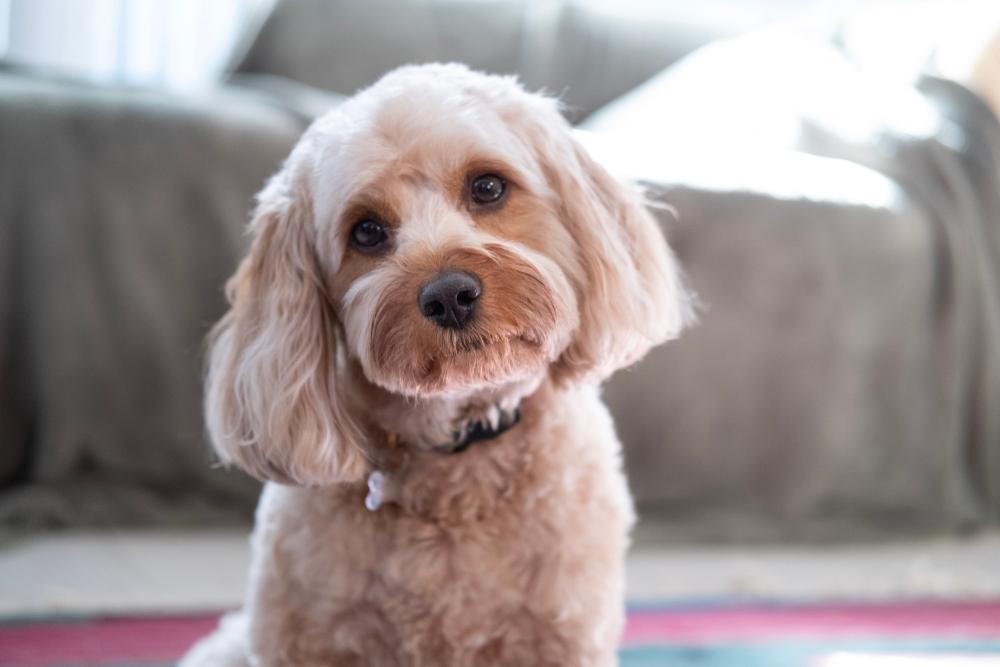 Datos, aspectos destacados y consejos sobre razas de perros