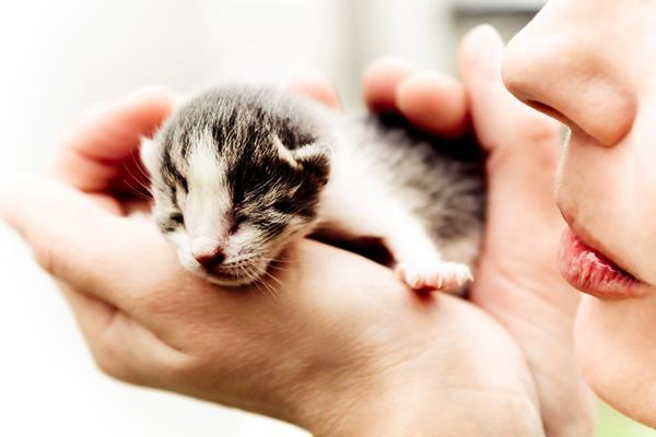 Un gatito recién nacido en la palma de una mano humana.