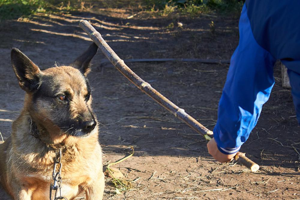 La mejor manera de castigar a un perro: guía de disciplina canina