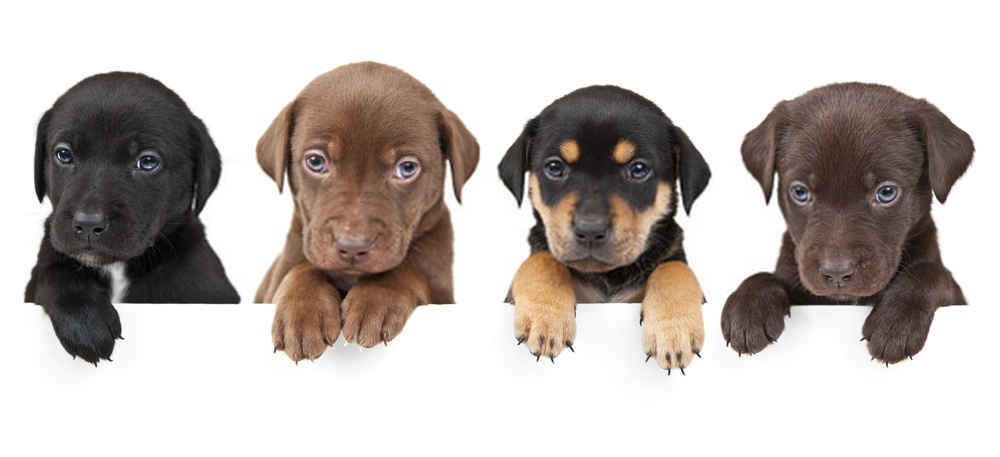 Los 10 datos principales sobre los cachorros: cosas asombrosas sobre los cachorros recién nacidos