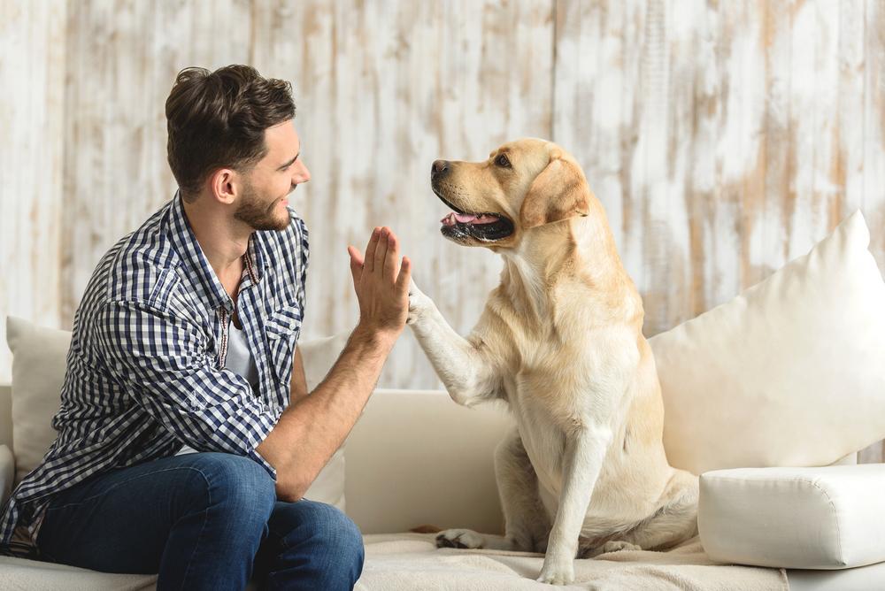 Tabla de crecimiento del perro: qué tamaño puede alcanzar mi perro