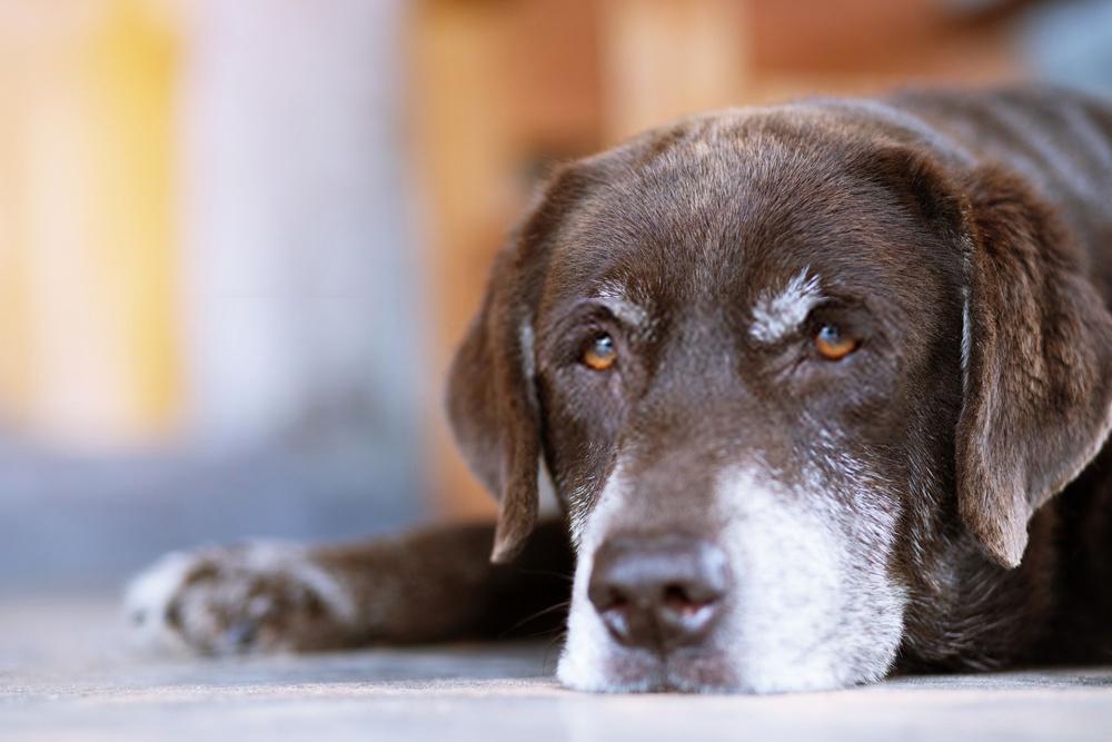 ¿Cómo saber la edad de un perro?  Cuatro etapas de la edad canina